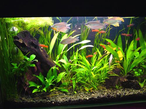 аквариум_akvarium