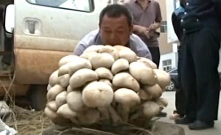 15-килограммовый гриб