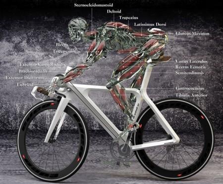 положение велосипедиста