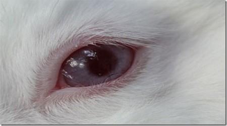 тестирование линз на кролике
