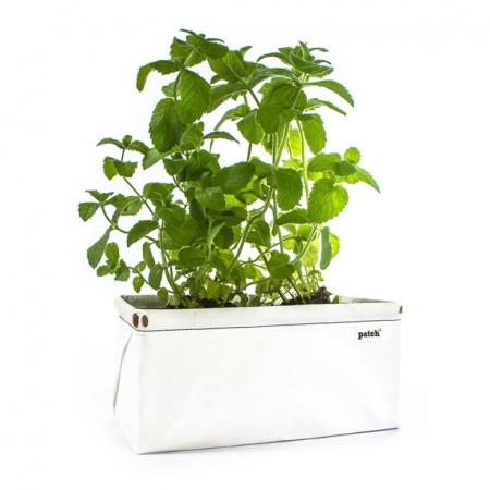 устройство для выращивания зелени