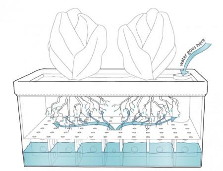 технология самостоятельного роста растений