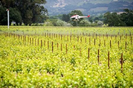 вертолет над виноградником