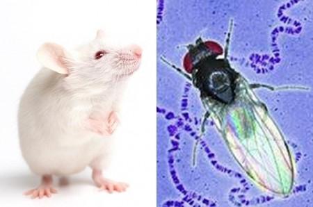 карта нейронов мыши и дрозофилы