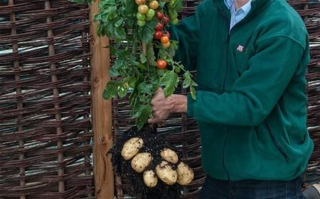 Картошка с помидорами