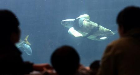 Черепаха-инвалид