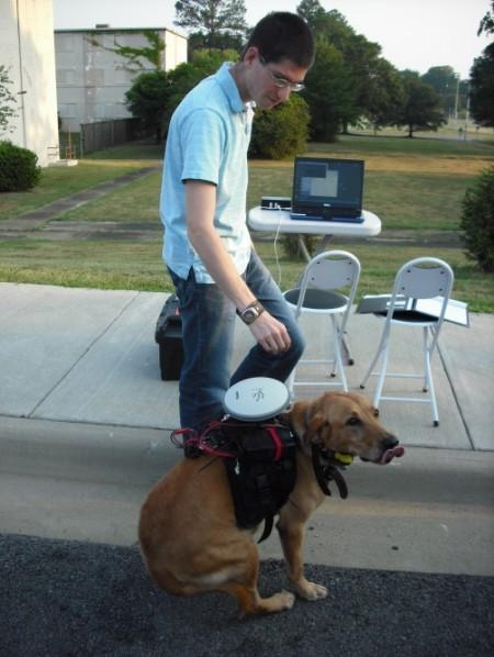 система управления собакой