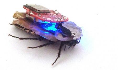 радиоуправляемый таракан