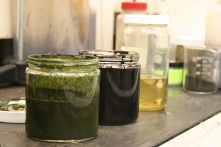 Топливо из водорослей