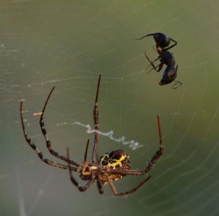 Перемещение паука