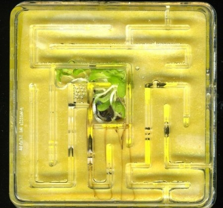 Провод из растения