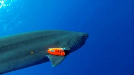 Контроль за акулой