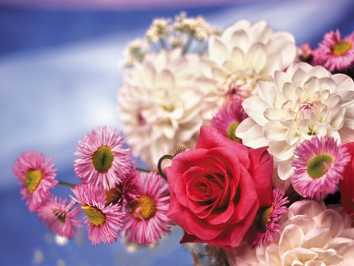 цветы букеты купить