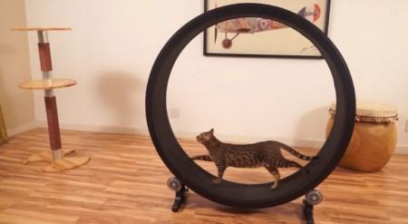 one fast cat