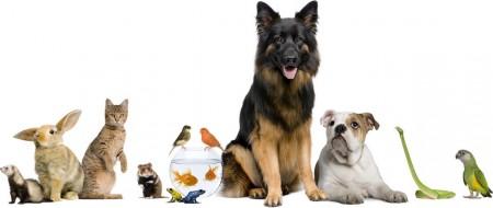 1296571373_veterinar
