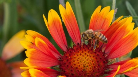 honey-antibiotic