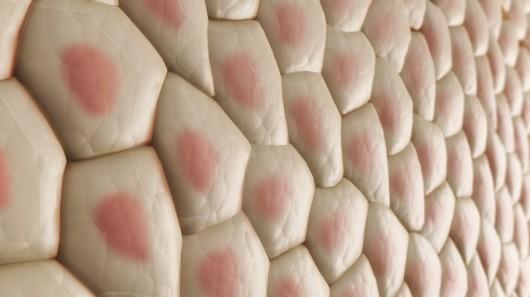 клетки кожи