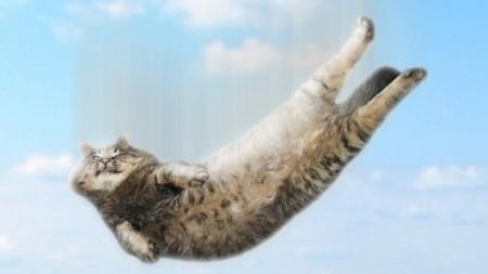 cat-fall