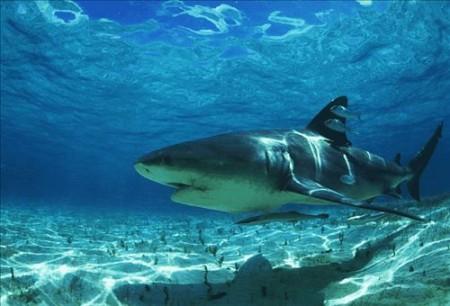 документальный-фильм-BBC-онлайн-Акула