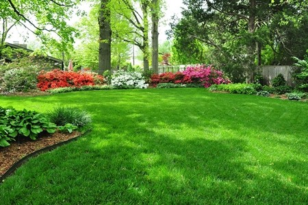 3-16-13_fescue-lawn-in-spring