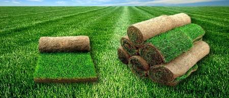banner_grass_web