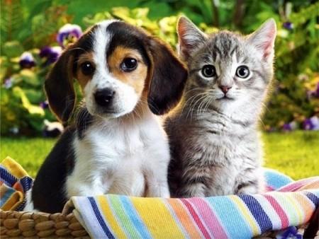 Уход-за-домашними-животными