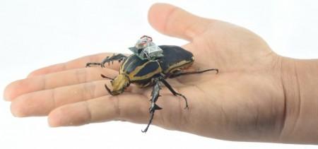 управляемый жук