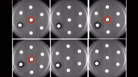 e-coli-new-antibiotics