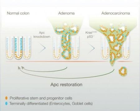 gene-reactivation