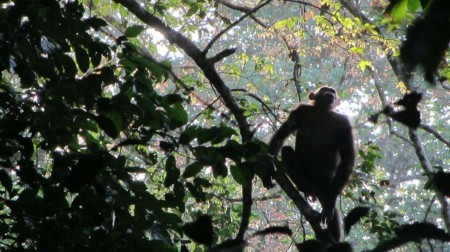 drone-chimp