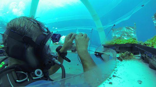 plants-under-the-sea