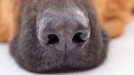 optical-dog-nose