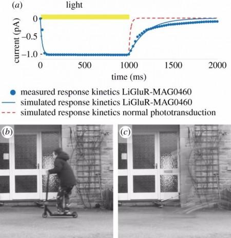 bionic-sight-simulation