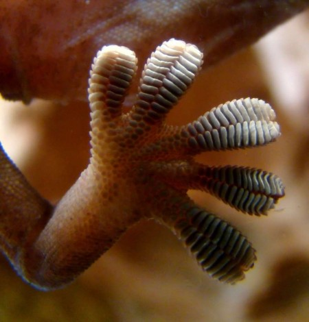 gecko-astronaut-anchor-2@2x