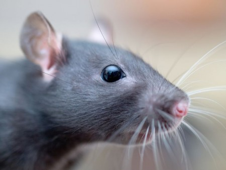 robotic-whiskers