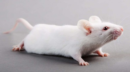 smart-mouse@2x