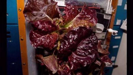 veggies-harvest-1@2x