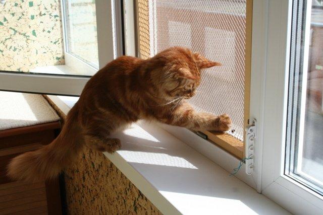 Сетка антикошка своими руками на деревянные окна