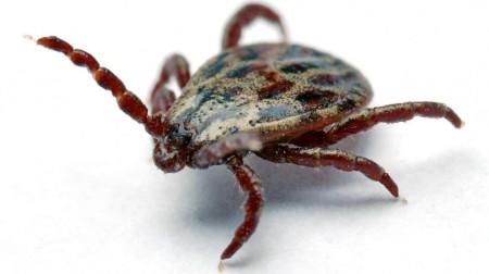 cattle-ticks-nanoparticles@2x