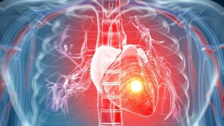 stem-cells-heart-1