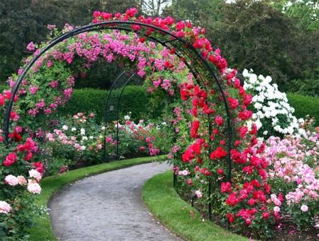 Вечнозеленые-растения-для-сада-фото