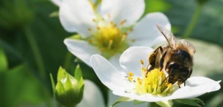 bee-pesticide-3