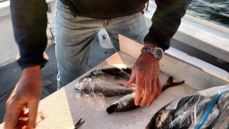Создано устройство зомбирующее рыбу