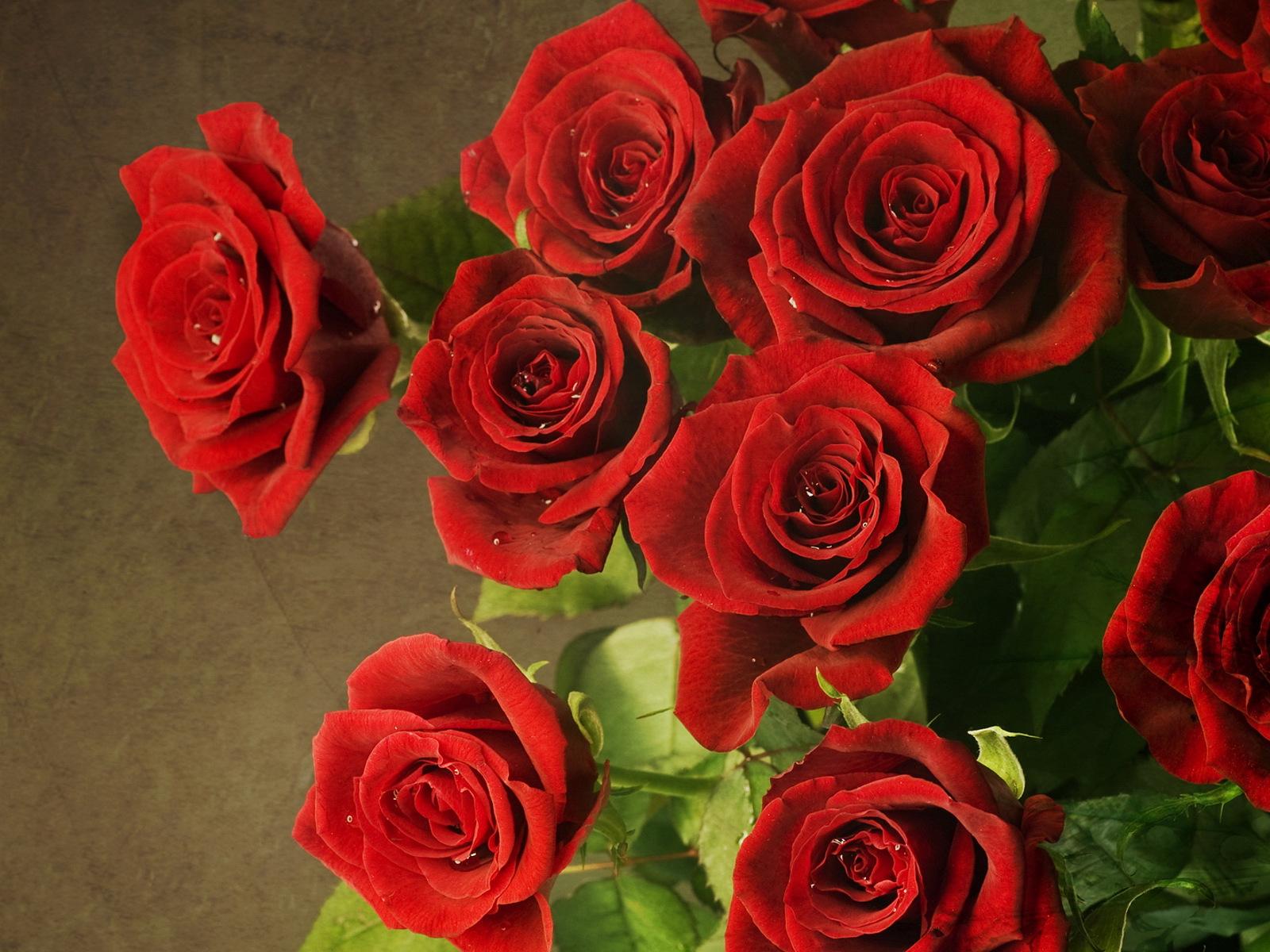 красные розы картинки красивые