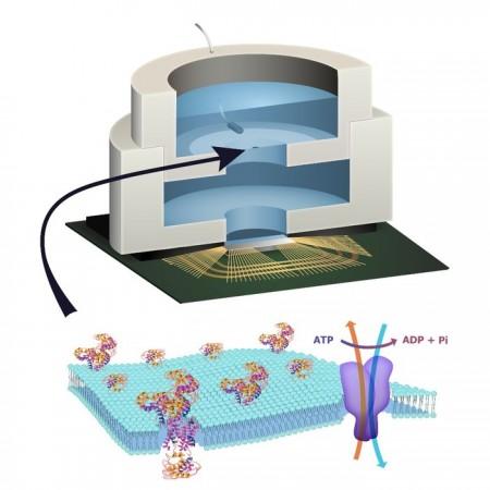 Колумбийские исследователи смогли создать био-чип