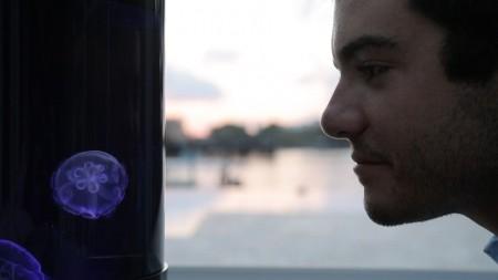 Разработан аквариум для содержания медуз в домашних условиях