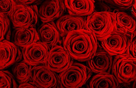 krasnye-rozy3