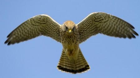 Дроны теперь смогут летать как птицы