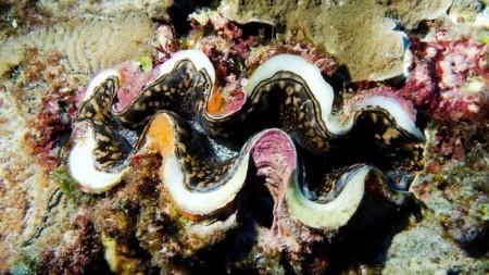 Моллюски могут улучшить фотоэлементы и цветные дисплеи