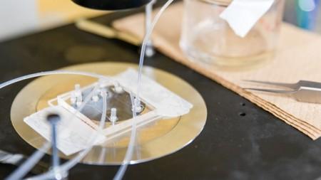Ученые разработали более действенный метод криоконсервации